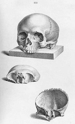 Knochen des Menschen – AnthroWiki